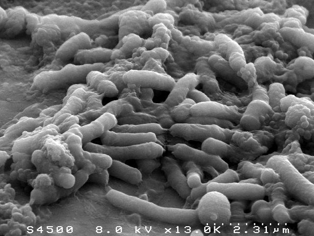 Olivier Berteau, lauréat ERC, à la pointe du microbiote