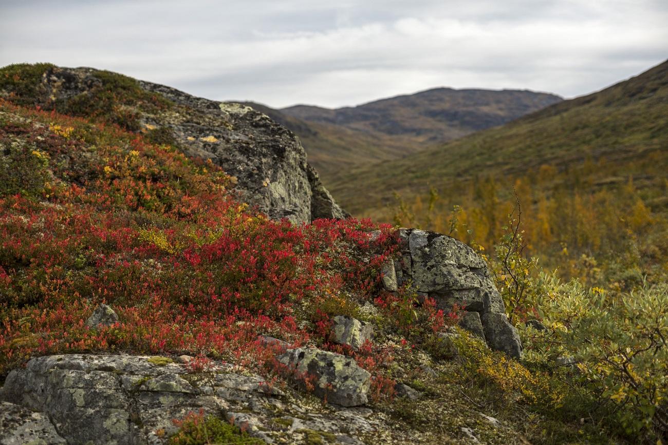 Les racines augmentent les émissions de carbone du permafrost