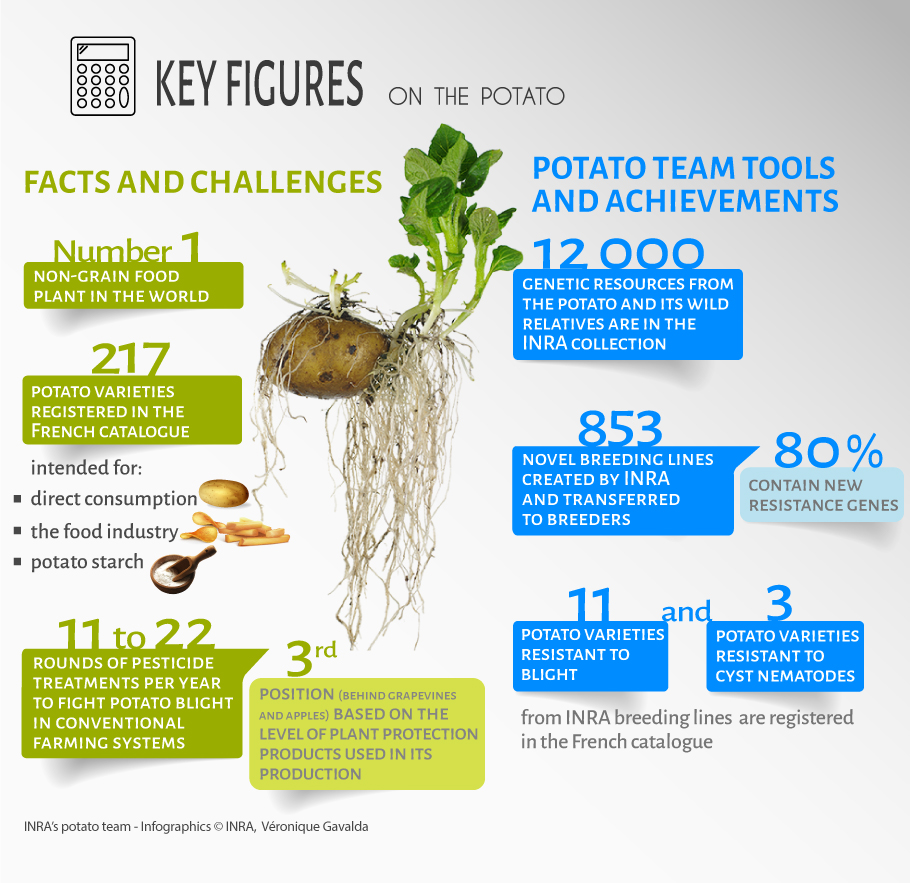 Potato: Key figures