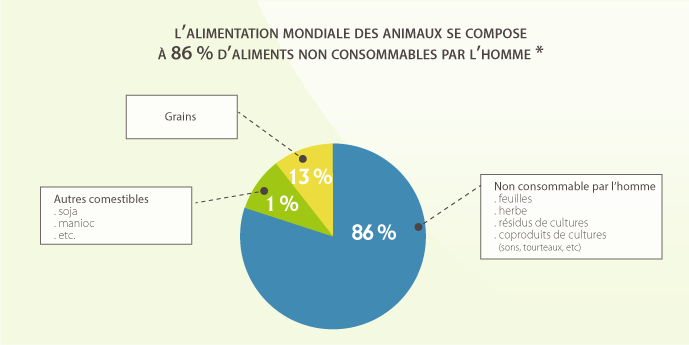 Camembert de l'alimentation animale