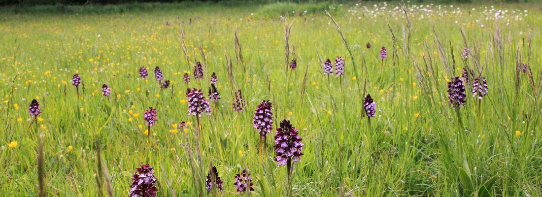 Protéger les prairies permanentes : une priorité pour la biodiversité et l'agroécologie